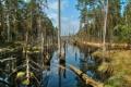 Картинка лес, разлив, деревья, весна, небо, река