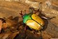 Картинка природа, лист, цвет, жук, насекомое