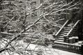 Картинка зима, снег, ветки, забор, дома, лестница