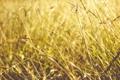 Картинка лето, трава, солнце, свет, желтая