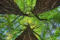 Картинка небо, листья, деревья, ствол, крона