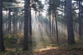Картинка лес, солнце, лучи, природа, тропа