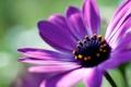 Картинка цветок, макро, фото, фон, обои, растение, лепестки