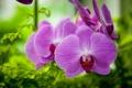 Картинка макро, орхидеи, экзотика