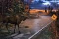 Картинка осень, Deer Crossing, машина, Ervin Molnar, пасмурно, вечер, лужи