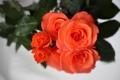 Картинка Розовый, Цветы, Розы, фото