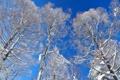 Картинка зима, снег, небо, деревья