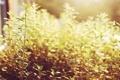 Картинка солнце, растения, зеленые