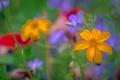 Картинка поле, трава, природа, растение, лепестки, луг