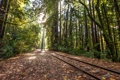 Картинка лес, пейзаж, железная дорога