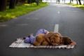 Картинка дорога, асфальт, девушка, сон, мишка