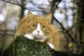 Картинка природа, охота, кот