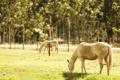 Картинка поле, лето, свет, кони