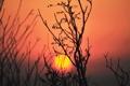 Картинка закат, силуэт, растение, небо, солнце