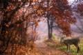 Картинка олень, парк, природа