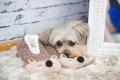 Картинка собака, шерсть, зеркало, тапочки