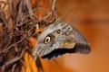 Картинка бабочки, природа, узоры, бабочка, растение, крылья