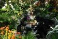 Картинка природа, пруд, парк, фото, New York, Belmont park