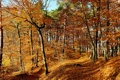 Картинка листья, лес, осень