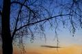 Картинка небо, облака, дерево, вечер, силуэт