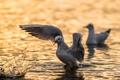 Картинка water, seagull, ANGRY BIRD