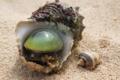 Картинка песок, моллюск, раковина, жемчужина
