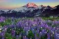 Картинка пейзаж, цветы, горы, природа