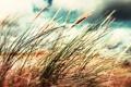 Картинка небо, трава, облака, макро, фон, колосок