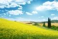 Картинка поле, небо, облака, пейзаж, цветы, природа