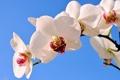 Картинка экзотика, ветка, орхидеи