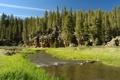 Картинка лес, пейзаж, природа, парк, река, США, Невада