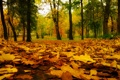 Картинка autumn, yellow, leaf, wood, green, red