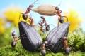Картинка лето, трава, макро, насекомые, работа, ситуация, муравьи