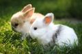 Картинка поле, природа, кролики
