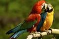Картинка попугаи, парочка, ара