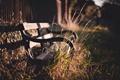 Картинка скамейка, фон, widescreen, обои, растительность, настроения, растение