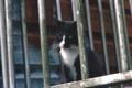 Картинка котэ, кот, хмурый, взгляд