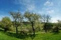 Картинка трава, деревья, весна