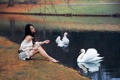 Картинка девушка, поза, озеро, сидит, лебеди