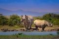 Картинка пейзаж, горы, носорог, африка