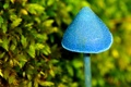 Картинка макро, синий, голубой, гриб, магический, грибочек