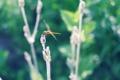 Картинка зелень, лето, стрекоза
