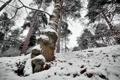 Картинка зима, лес, дерево