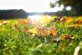 Картинка зелень, осень, трава, листья, солнце, размытость