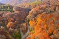 Картинка осень, лес, деревья, горы, русло