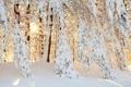 Картинка природа, лес, снег, солнце