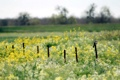 Картинка поле, цветы, природа, птица