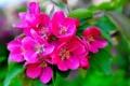 Картинка цветение, ветка, макро