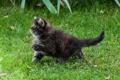 Картинка лето, трава, лапа, котёнок