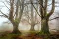 Картинка осень, лес, трава, деревья, ветки, природа, листва